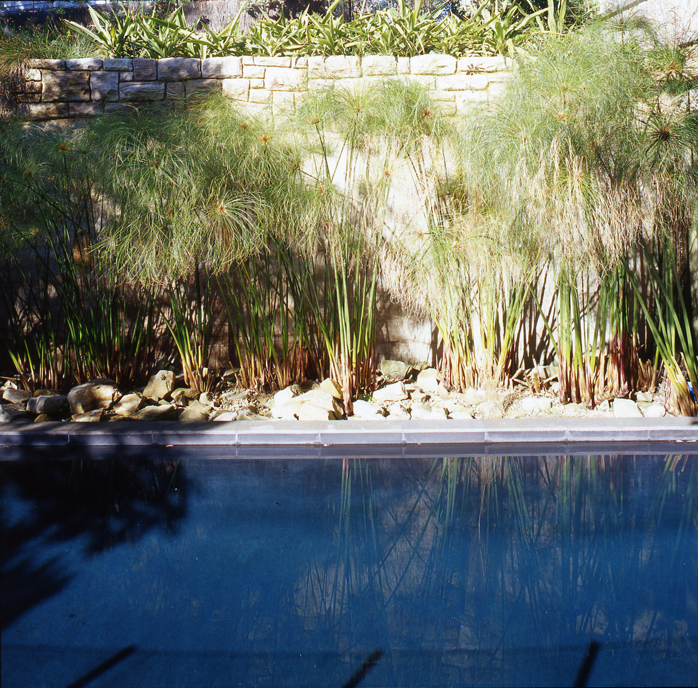 Harbour House by Sydney award winning residential architecture office Sam Crawford Architects. Pool and soft landscaping