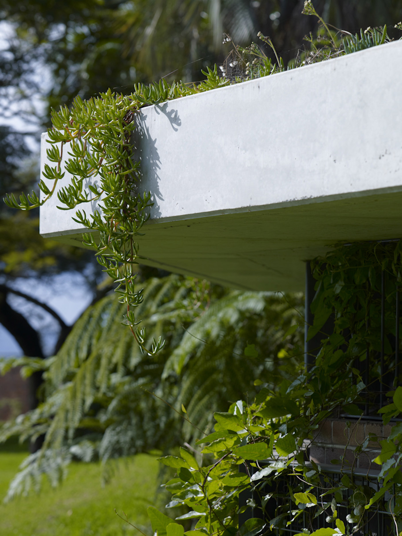 Beare Park Amenities by award winning Sydney public architecture firm Sam Crawford Architects. Detail of green roof