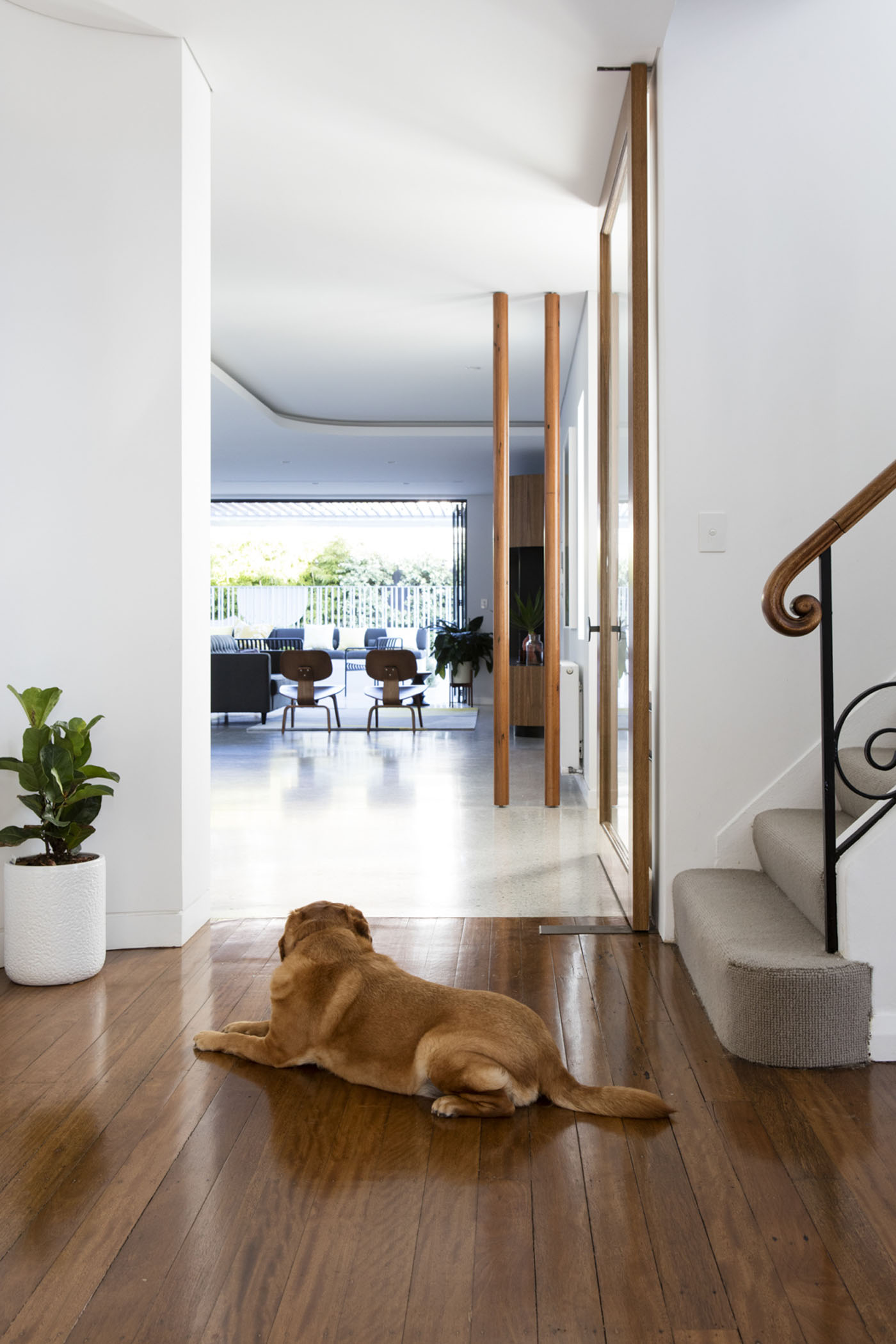 Conway Atkins House in Dover Heights by Sydney architect Sam Crawford Architect. Allen the dog keeps guard over his kingdom.