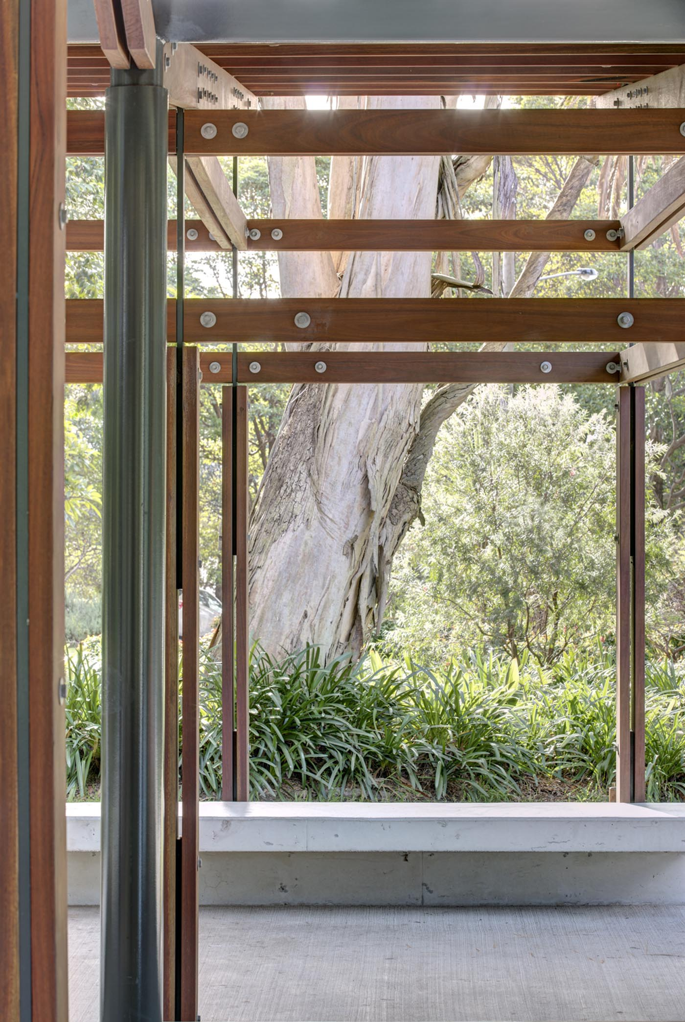 Cabarita Park Conservatory by award winning public architectural firm Sam Crawford Architects. View to giant fig tree.