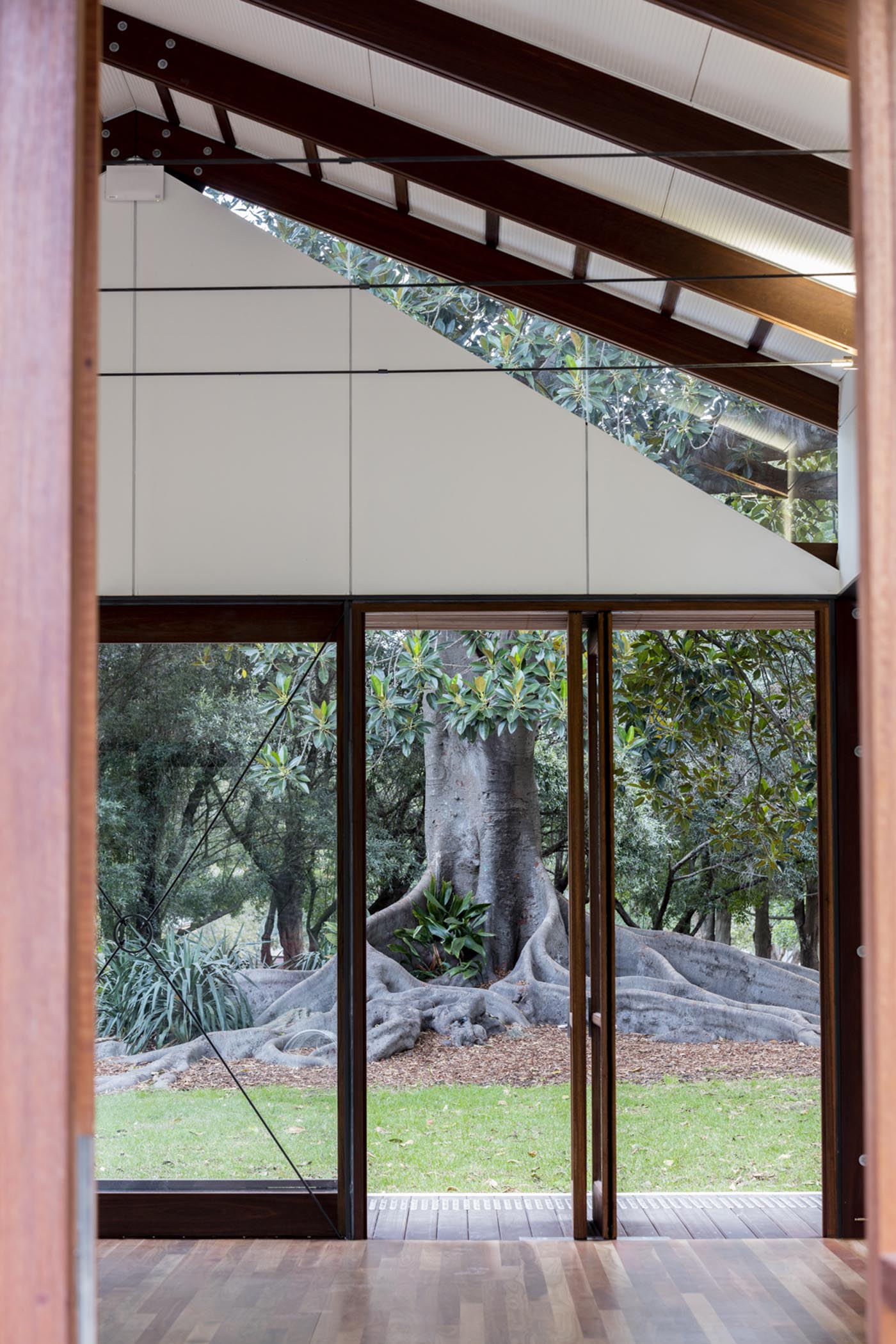 Cabarita Park Conservatory by award winning public architectural firm Sam Crawford Architects. View through to giant fig tree.